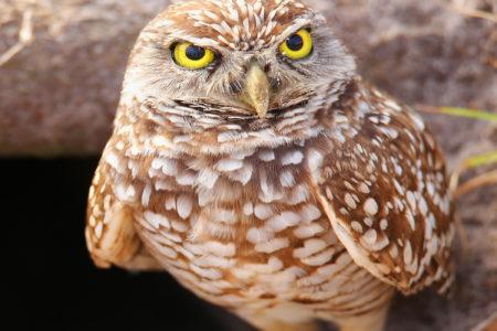 Image for We're failing edge-of-range endangered species
